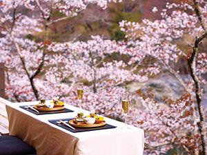 「星のや京都」桜の季節を前に リニューアルオープン